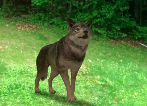 Como ver animais em 3D através do Google? Descobre aqui! – Mundo Smart - mundosmart